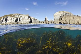 Undersea landscape, Lundy - Alexander Mustard/2020Vision