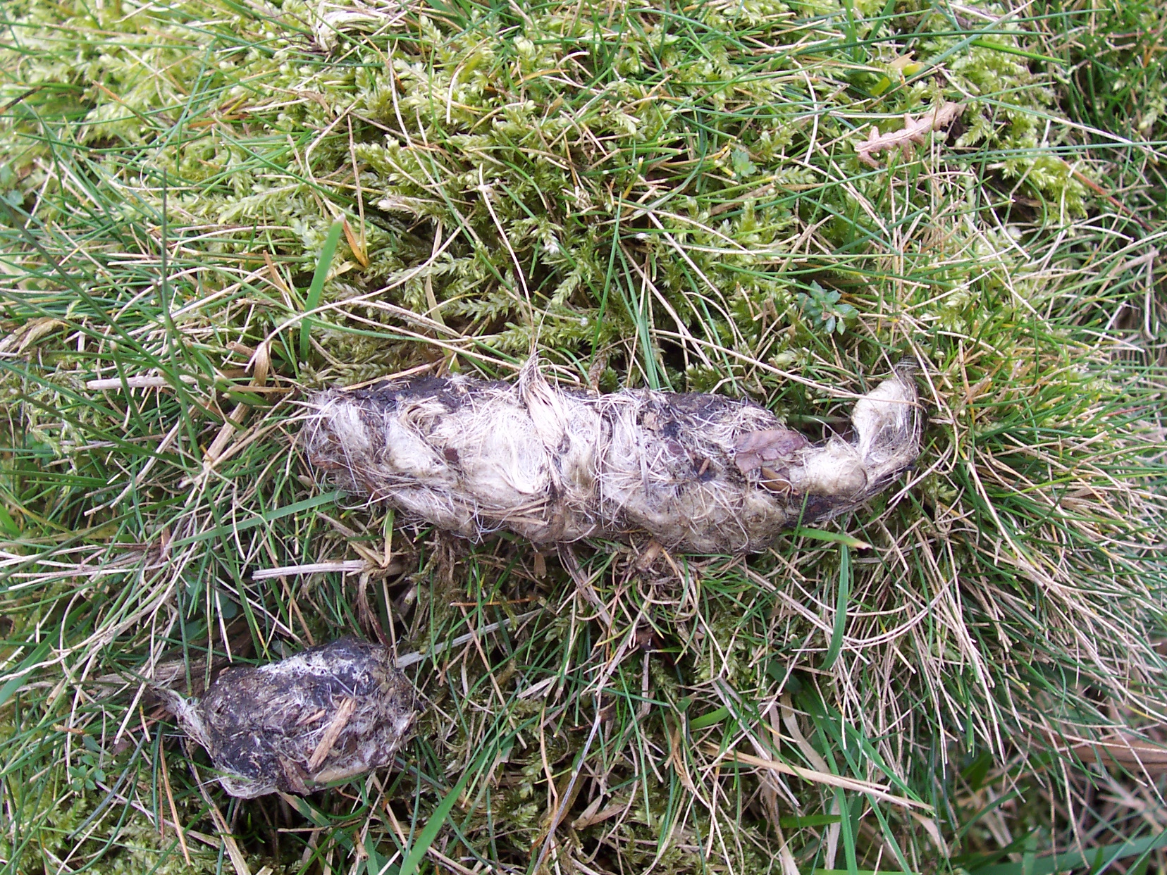 Identify poo | The Wildlife Trusts