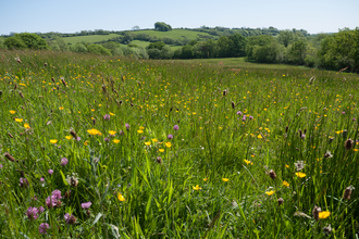 Lowland meadow and pasture