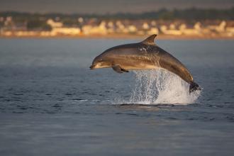 c6e1d2084583 White-beaked Dolphin
