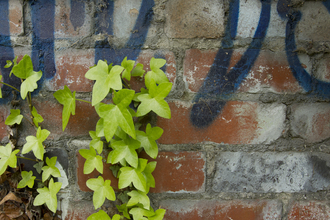 Graffiti and plants (c) Paul Hobson