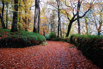 Woodland in autumn with the path covered in fallen red leaves, the Wildlife Trusts