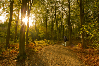 Man walking his dog through an autumn woodland with a low sun shining through the trees, The Wildlife Trusts