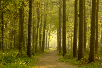 Path leading through forest, The Wildlife Trusts