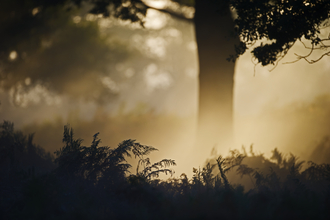 Oak woodland in gentle light at dawn, The Wildlife Trusts
