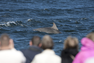 People watching bottlenose dolphin, The Wildlife Trusts