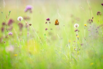 Meadow The Wildlife Trusts