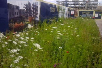 Brentford Lock development site wildflower hoarding buffer strip, Willmott Dixon