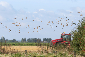 Vine House Farm field with red tractor and birds © Nicholas Watts, Vine House Farm Bird Foods