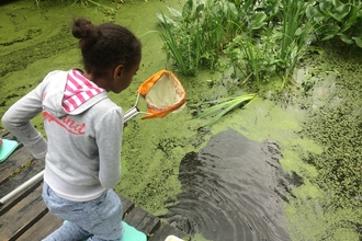 Girl pond dipping
