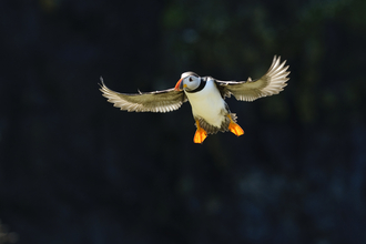 puffin wildlife trust