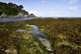 Rockpools and seaweed on the shore in summer, The Wildlife Trusts