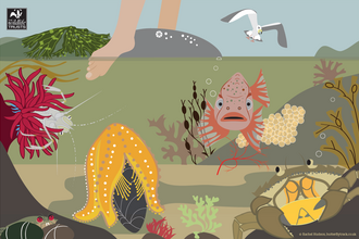 Rockpool horror show illustration