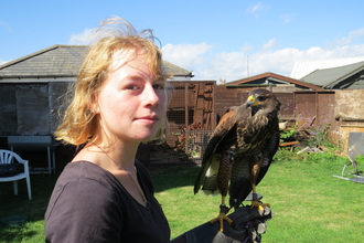 Florrie holds her harris hawk, Nightingale