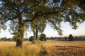 Trees next to farm fields in summer