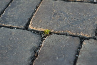 Weed in pavement
