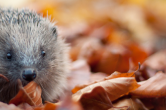 Hedgehog © Tom Marshall