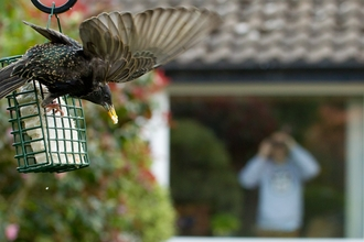 Starling on bird feeder from window