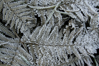 Leaves in frost wildlife trust