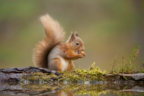 squirrel dating site significato di dating in italiano