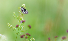 meadow Wildlife Trust