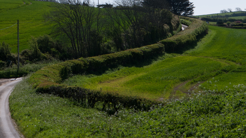 Hedgerow The Wildlife Trusts