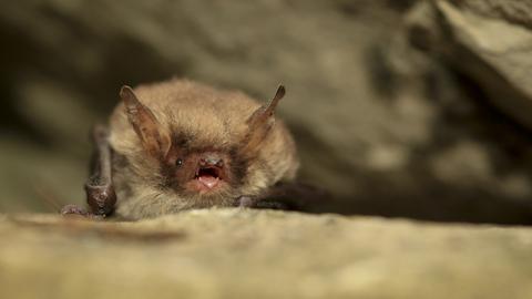 Natterer S Bat The Wildlife Trusts