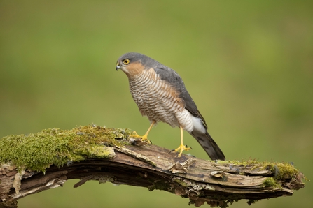 Identify Birds Of Prey The Wildlife Trusts
