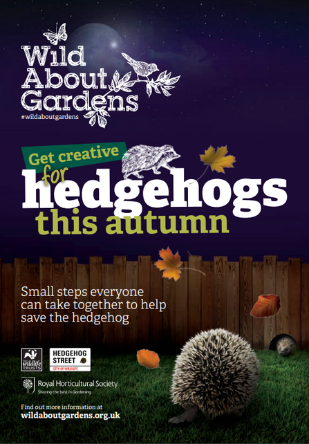 hedgehog booklet