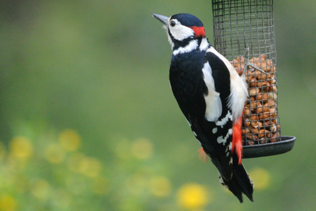 Woodpeckers The Wildlife Trusts