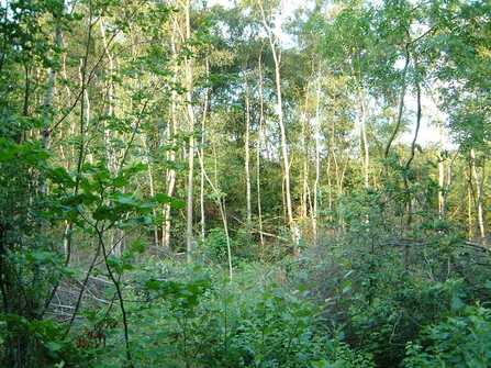 Coppiced woodland, Cloud Wood (Leicestershire and Rutland Wildlife Trust)