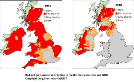 Red squirrels distribution map