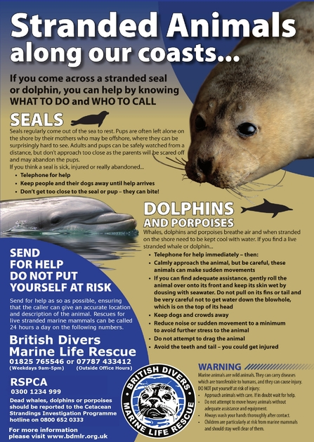 Stranded Mammals Campaign poster