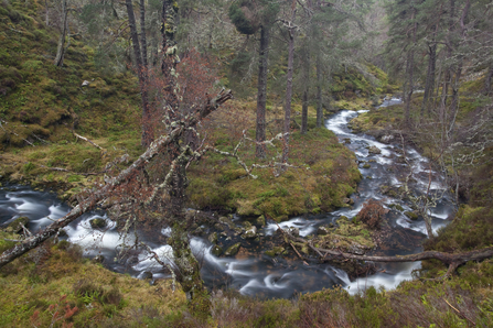 Stream running through ancient Scottish woodland, the Wildlife Trusts
