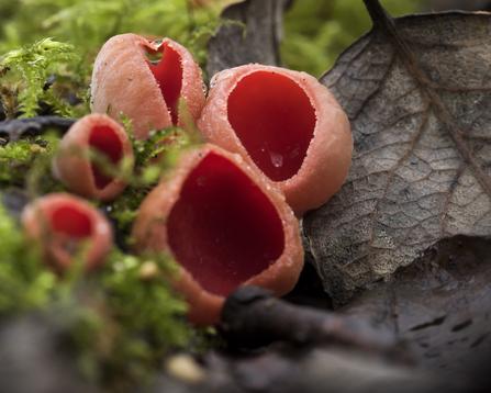 find fungi the wildlife trusts