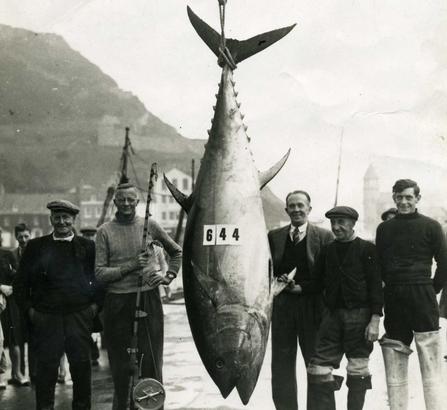 Bluefin tuna, Scarborough, 1949 - Phil Burton