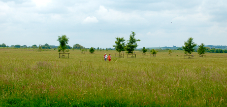 Trumpington Meadows nature reserve