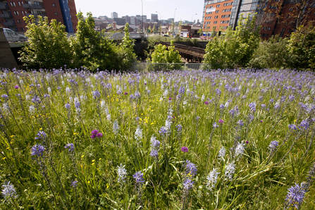 Wild flowers planted in Sheffield city centre