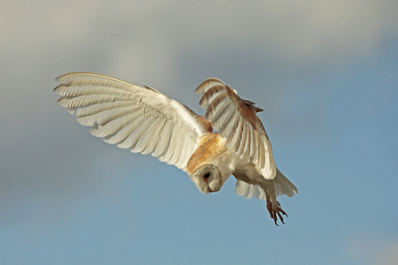 barn owl wildlife trust
