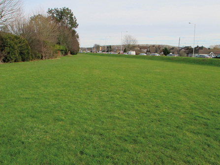 close mown green space
