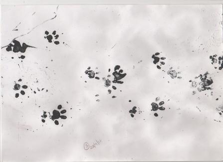 Hedgehog prints in ink