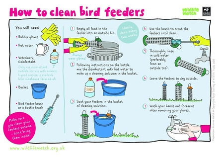 How to clean bird feeders