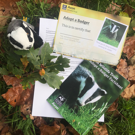 avon wt badger adopt pack