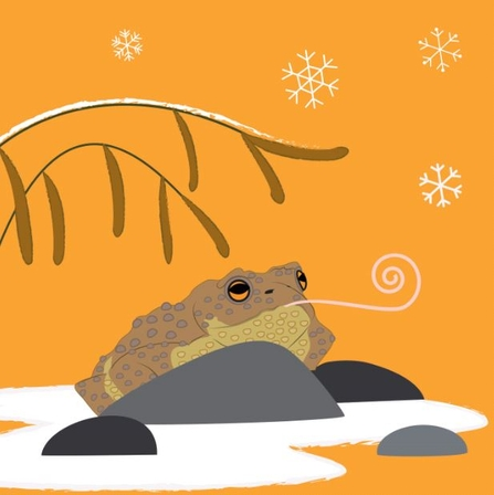 toad in the snow