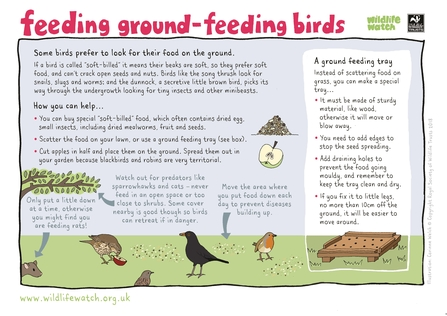 Feeding birds on the ground