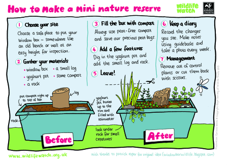 How to make a mini nature reserve activity sheet