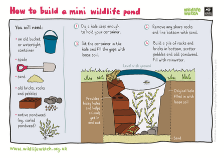 Make a mini pond activity sheet