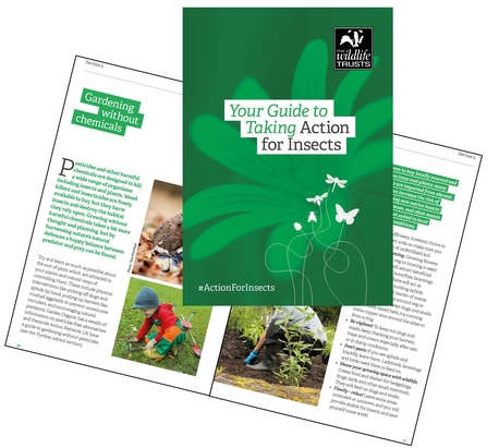 Action for Insect_home guide