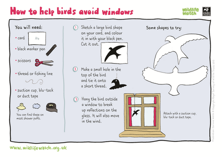 Help birds avoid windows activity sheet