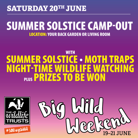 Big Wild Weekend - camp-out